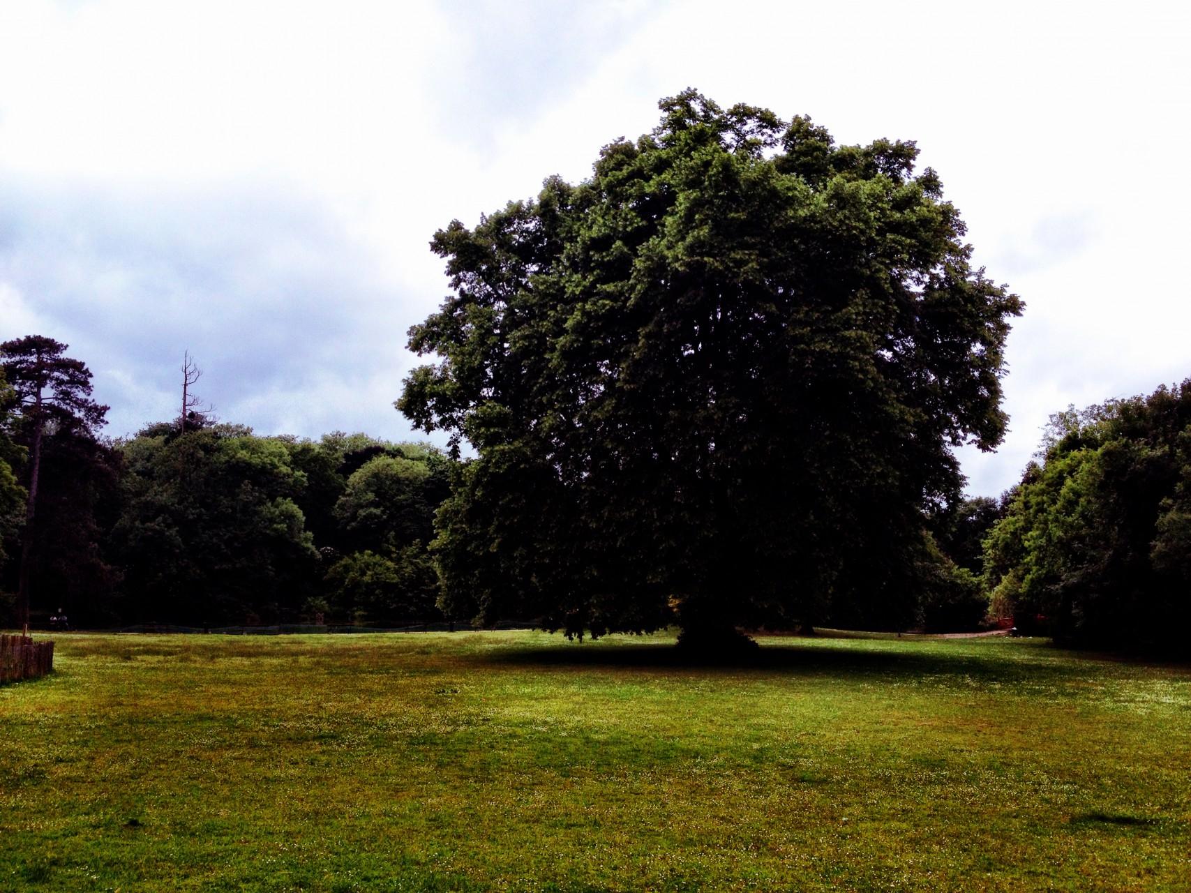 Parc Rotschild - Boulogne Billancourt - 2015